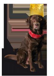 kreatyv-Hund Marlow mit Krone